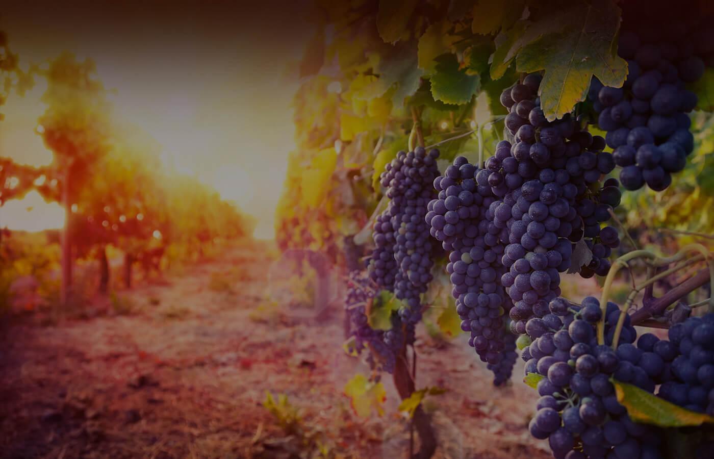 vinotekaWino na zdrowie